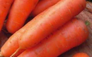 Морковь Амстердамская: характеристика и описание, урожайность сорта, уход и выращивание, фото