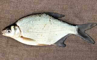 Лещ холодного копчения: как правильно закоптить рыбу в домашних условиях, рецепты, фото