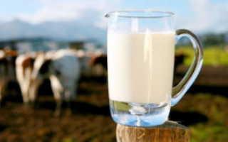 Почему у коровы солёное молоко, если она не беременна, солёное молоко перед и после отёла: причины и лечение