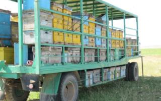 Кассетное пчеловодство: павильон для пчёл своими руками (чертежи)