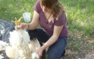 Категории куриных яиц: чем отличаются, классификация и масса, какие лучше