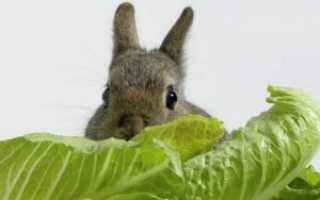 Можно ли кормить кроликов капустой (цветной, пекинской, свежей): польза и вред, особенности рациона