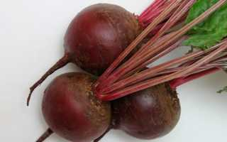 Свёкла Бордо 237: описание и характеристика растения, условия для выращивание и уход, фото, отзывы