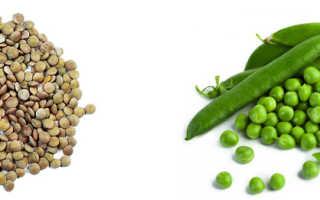 Горох или чечевица: что полезнее, основные различия, калорийность, белковый состав