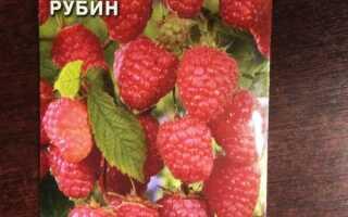 Как вырастить малину из семян в домашних условиях на рассаду: благоприятные условия, особенности ухода, отзывы