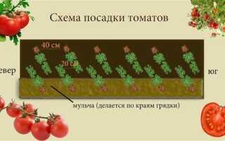 Схема посадки томатов в теплице: размещение, густота посадки, как и сколько можно посадить