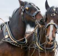 Уздечка для лошади: виды, строение, размеры, как сделать своими руками, как правильно надеть, видео
