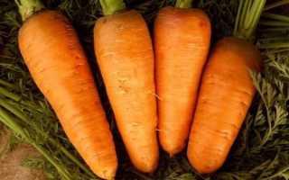 Морковь Шантане: описание и характеристика сорта, выращивание и уход, фото, отзывы