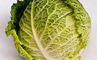 Можно ли квасить савойскую капусту: лучшие пошаговые рецепты на зиму, правила хранения