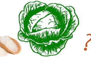 Сколько соли и моркови требуется при засолке капусты: расчёт пропорций