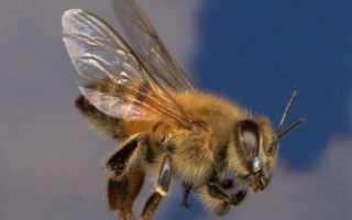 Пчеловодство в северных условиях: возможно ли разводить, особенности мёда северных пчёл, советы пчеловодов