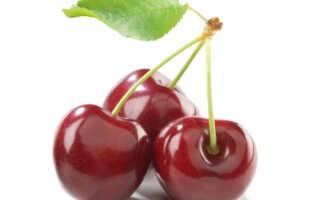 Ветки вишни: полезные свойства, показания и противопоказания, состав и применение