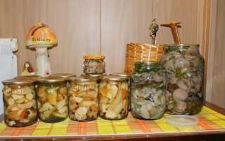 Как солить грибы маслята на зиму в банках: простой рецепт, соление горячим и холодным способом
