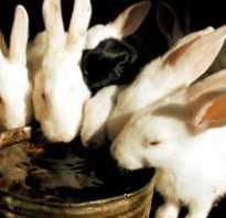 Чем и как поить кроликов зимой на улице в домашних условиях, если вода замерзает