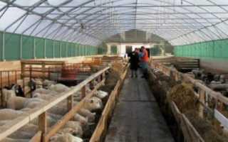 Как держать овец без выпаса: особенности, правила, достоинства и недостатки стойлового содержания
