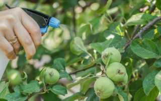 Тля на яблоне: основные причины и признаки появления вредителя, способы лечения, борьбы и профилактики, фото