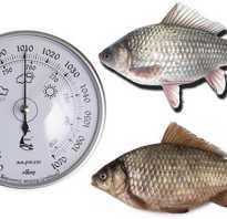 При каком атмосферном давлении лучше клюёт карась: когда предпочтительней ловить рыбу весной, летом и осенью