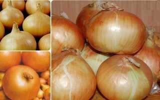 Лук Элан: описание и характеристика, посадка, особенности ухода и выращивания сорта, фото