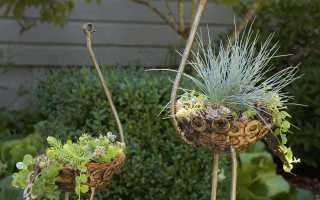 Ландшафтный дизайн вокруг дома и бани своими руками: фото, элементы декора, какие растения посадить на участке