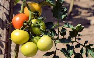 Что сделать, чтобы помидоры быстрее краснели (сорванные, на кусте): чем полить и подкормить, оптимальные условия хранения