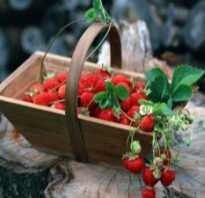 Чем отличается клубника от земляники: описание, питательные вещества, особенности выращивания, главные отличия, фото
