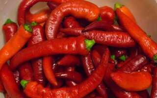 Квашеный горький перец на зиму: лучшие рецепты, пошаговое приготовление