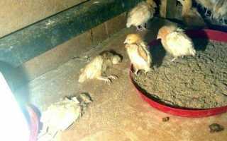 «Байтрил»: инструкция по применению для лечения и профилактики цыплят