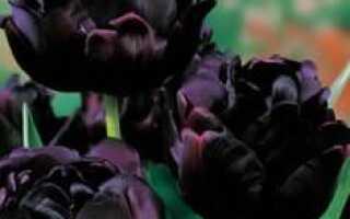 Тюльпан сорта Чёрный принц и другие сорта чёрных тюльпанов с цветком тёмных тонов