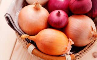 Что будет, если есть лук каждый день: польза и вред, нормы употребления