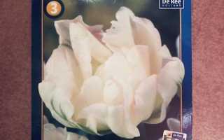 Тюльпан махровый поздний Финола: посадка и уход, применение в ландшафтном дизайне, фото и описание Finola