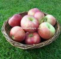 Яблоня Десертное Исаева: характеристика и описание сорта, особенности посадки и ухода за деревом, фото