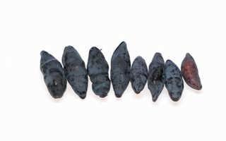 Сорт съедобной плодовой жимолости Фиалка: описание с фото, преимущества и недостатки