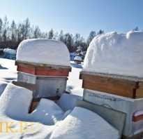 Уральское пчеловодство: технологии содержания пчёл, виды уральских ульев, методы пчеловодства