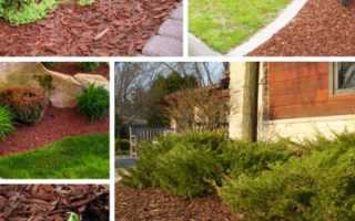 Мульча из сосновой коры: применение и преимущества, правила мульчирования, использование в ландшафтном дизайне
