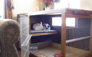 Домик для кролика: как сделать своими руками в домашних условиях, чертежи и размеры, обустройство, фото, видео