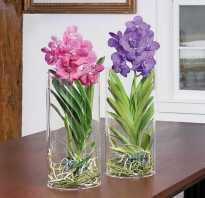Тепличка для орхидеи без корней: как сделать своими руками в домашних условиях, фото