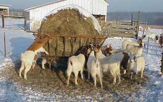 Как правильно кормить козу зимой: перед и после окота, основные правила кормления, как составить рацион