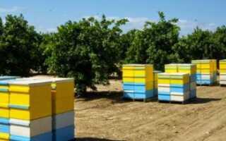 Канадское пчеловодство: технология содержания пчёл, виды ульев, методы пчеловодства