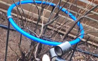 Как правильно огородить крыжовник: способы выполнения ограды, подпорки своими руками из доступных материалов, фото