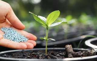 Как подкормить огурцы азотом: виды подкормок и правила внесения удобрения, видео