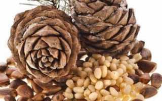 Польза кедровых орехов для женщин, полезные свойства для организма после 50 лет, противопоказания и вред, чем полезны орешки