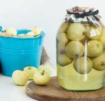 Что можно приготовить из яблок сорта Белый налив на зиму: лучшие рецепты