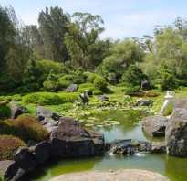 Почему в пруду мутная вода: как правильно очистить водоём с рыбами, инструменты и средства для очистки