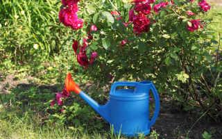 Удобрение весной для роз: чем лучше подкармливать, сколько и как правильно вносить удобрения, изготовление удобрений в домашних условиях