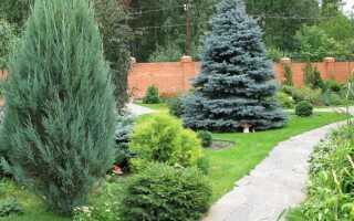 Голубая ель в ландшафтном дизайне, композиции с голубой елью в саду, перед домом, фото