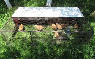 Клетки для цыплят: как сделать своими руками в домашних условиях, размеры, чертежи, описание процесса выращивания, фото, видео