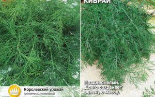 Укроп Кибрай: характеристика и описание сорта, фото, выращивание и уход