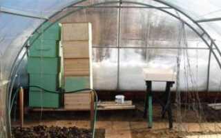 Зимовка пчёл в теплице из поликарбоната: как организовать содержание, особенности ухода, видео