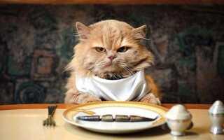 Интересные факты о том, как ест кошка