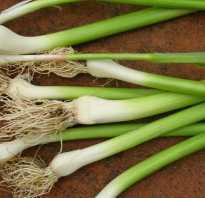 Чеснок — это овощ или нет? Особенности, характеристики и описание культуры